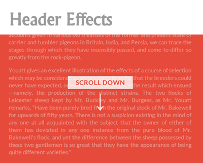 on-scroll-header-effects